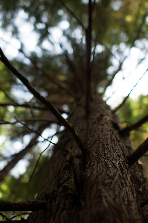 Rainbird 4, Close Up of Bark