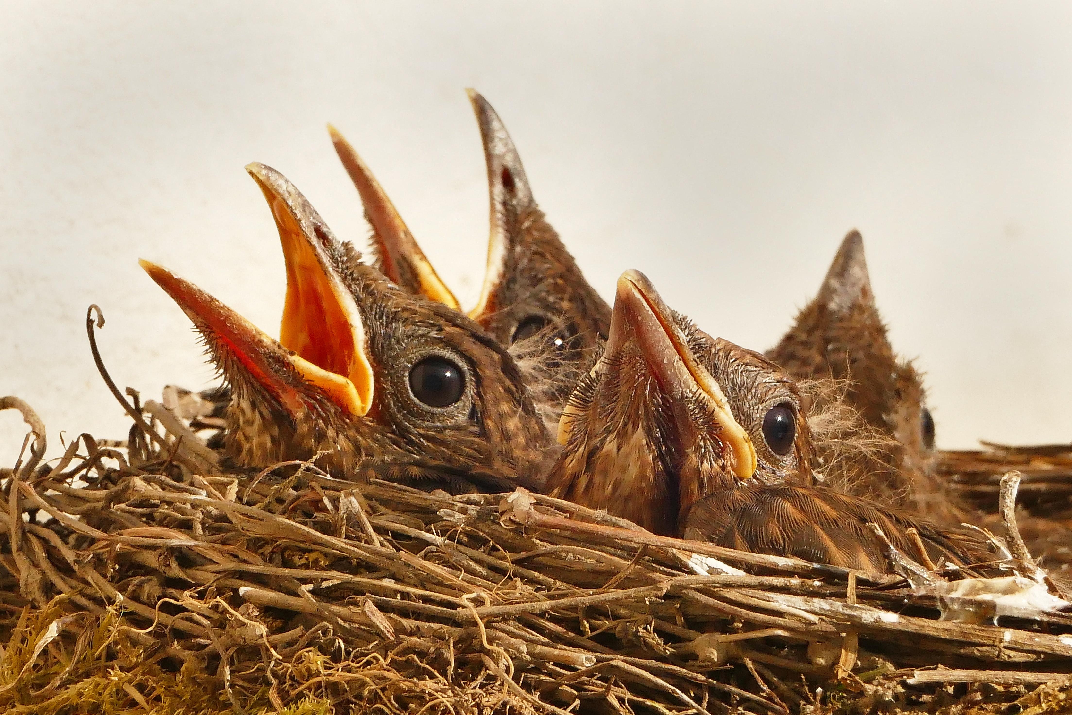 Baby Bird Season is HERE!