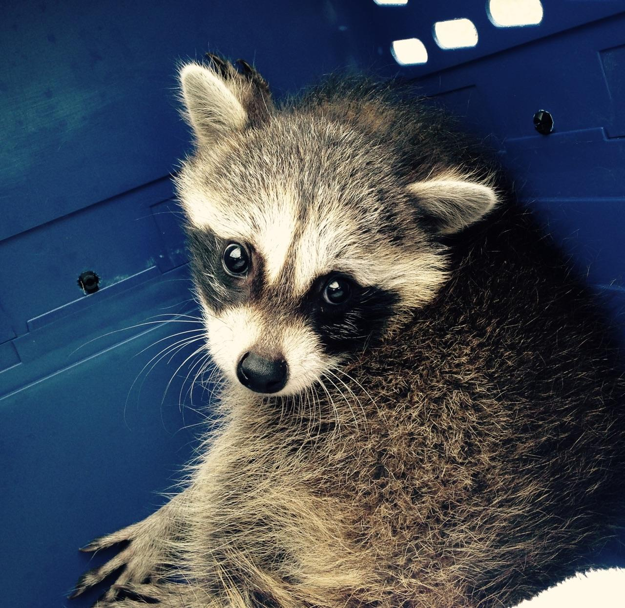 nebraska wildlife rehab inc wildlife help found a wild