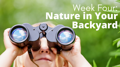 Audubon at Home Week Four: Nature in Your Backyard