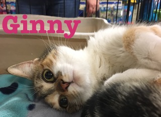 Ginny adopted feb 2018