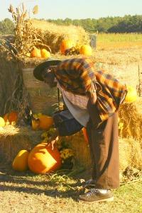 A Maze Of Pumpkins