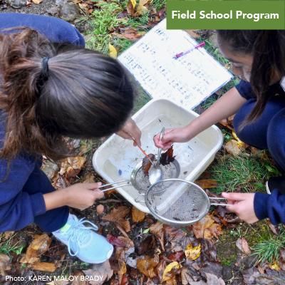 Field School - Stream Exploration