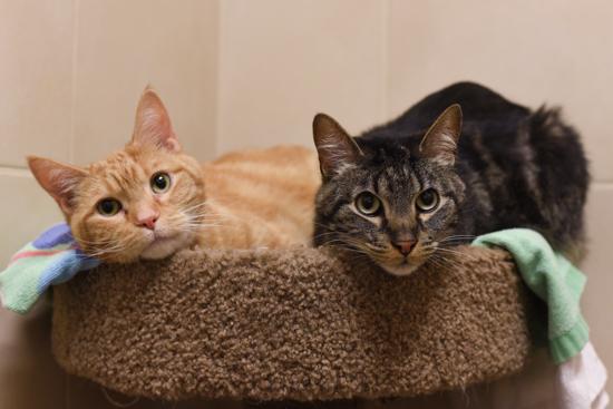 Felix & Oscar