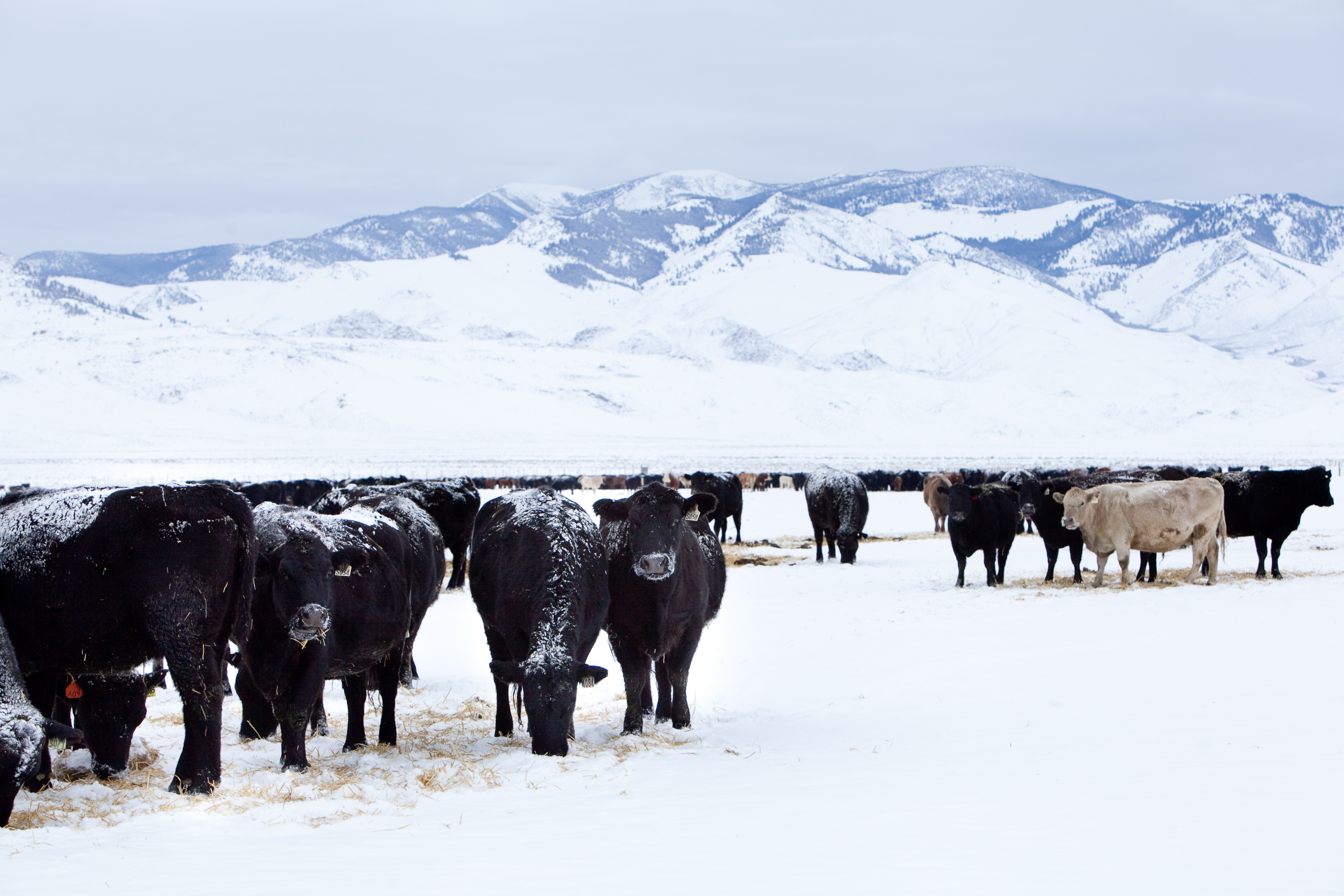 Winter Time At The Ranch