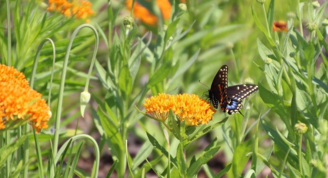 Place a presale order for the Native Plant Nursery Open House...