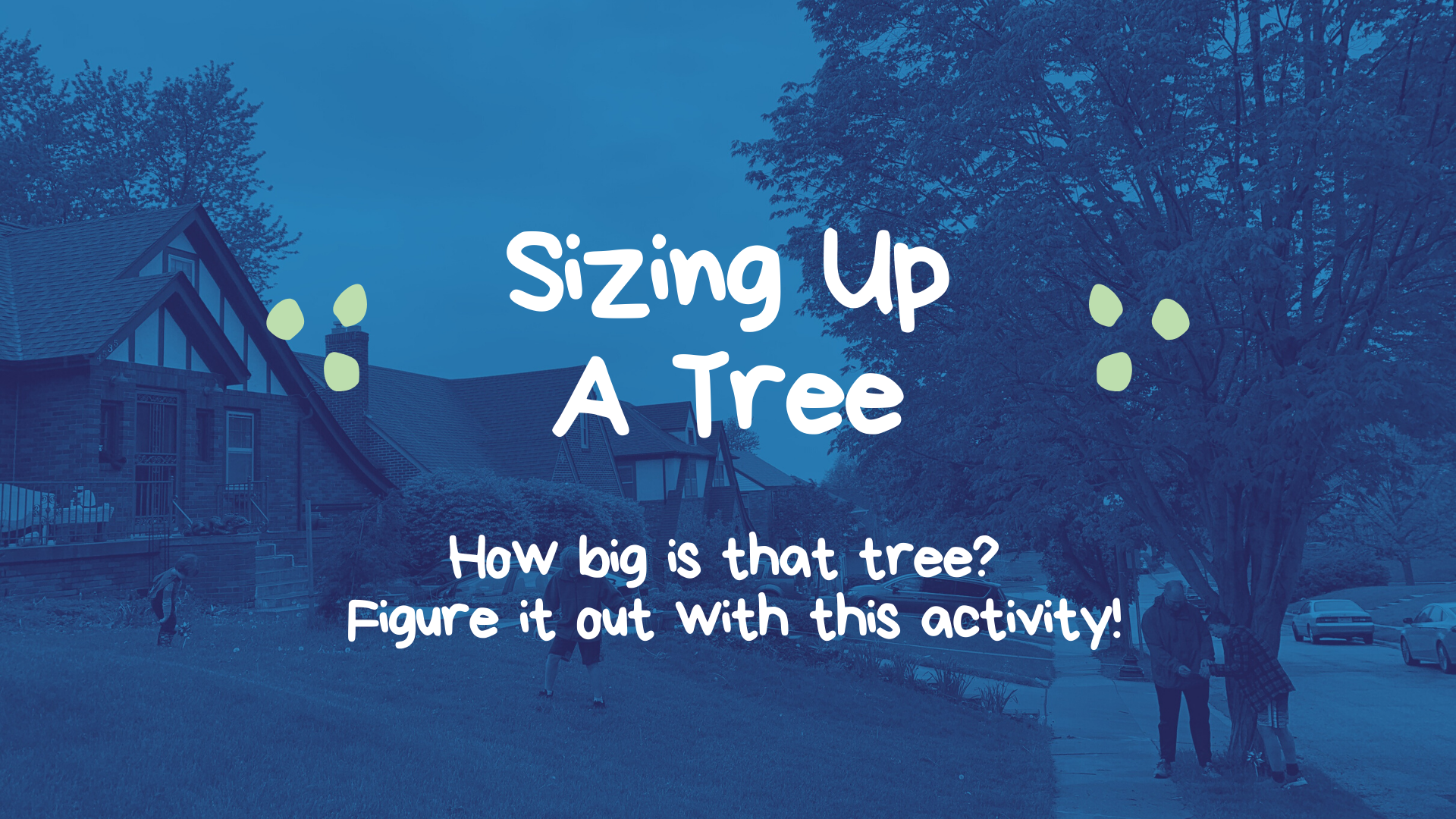 Sizing Up A Tree