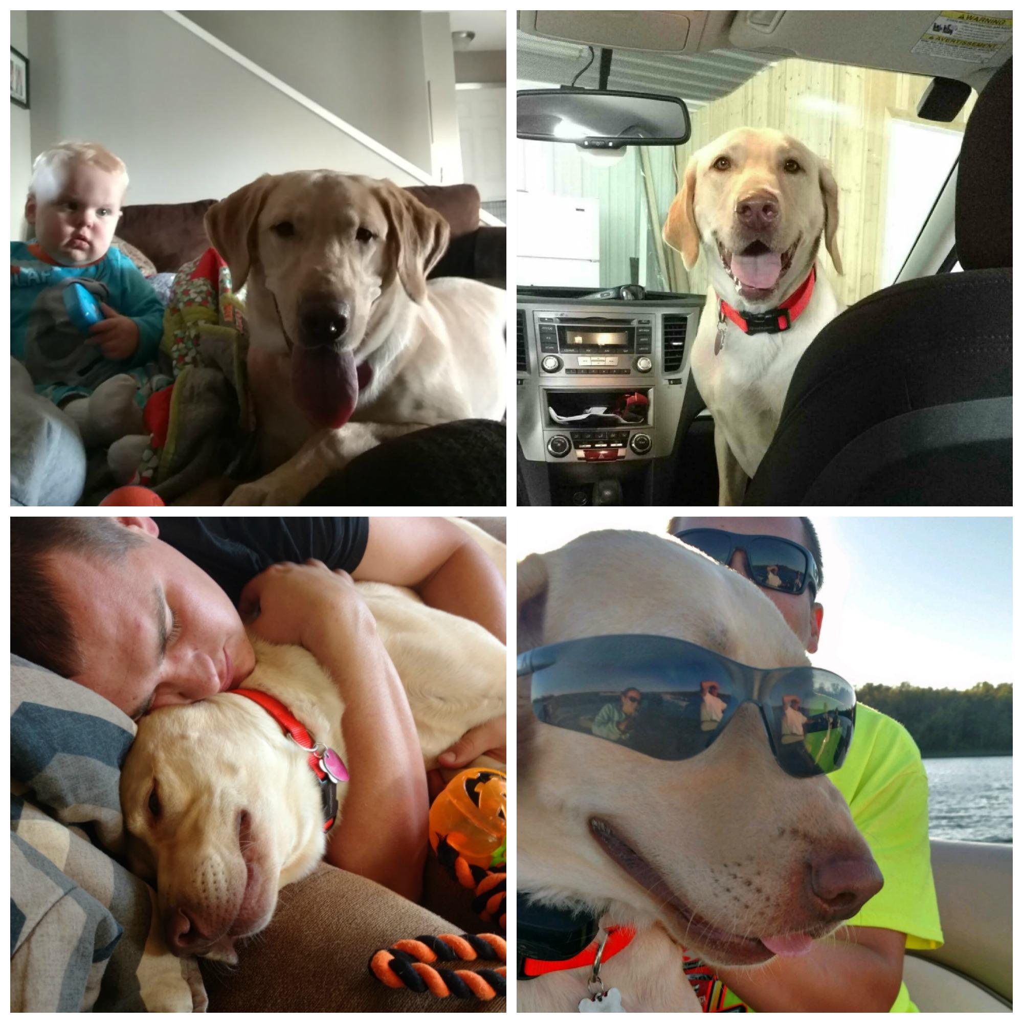 Michigan Humane Society Pet Adoption