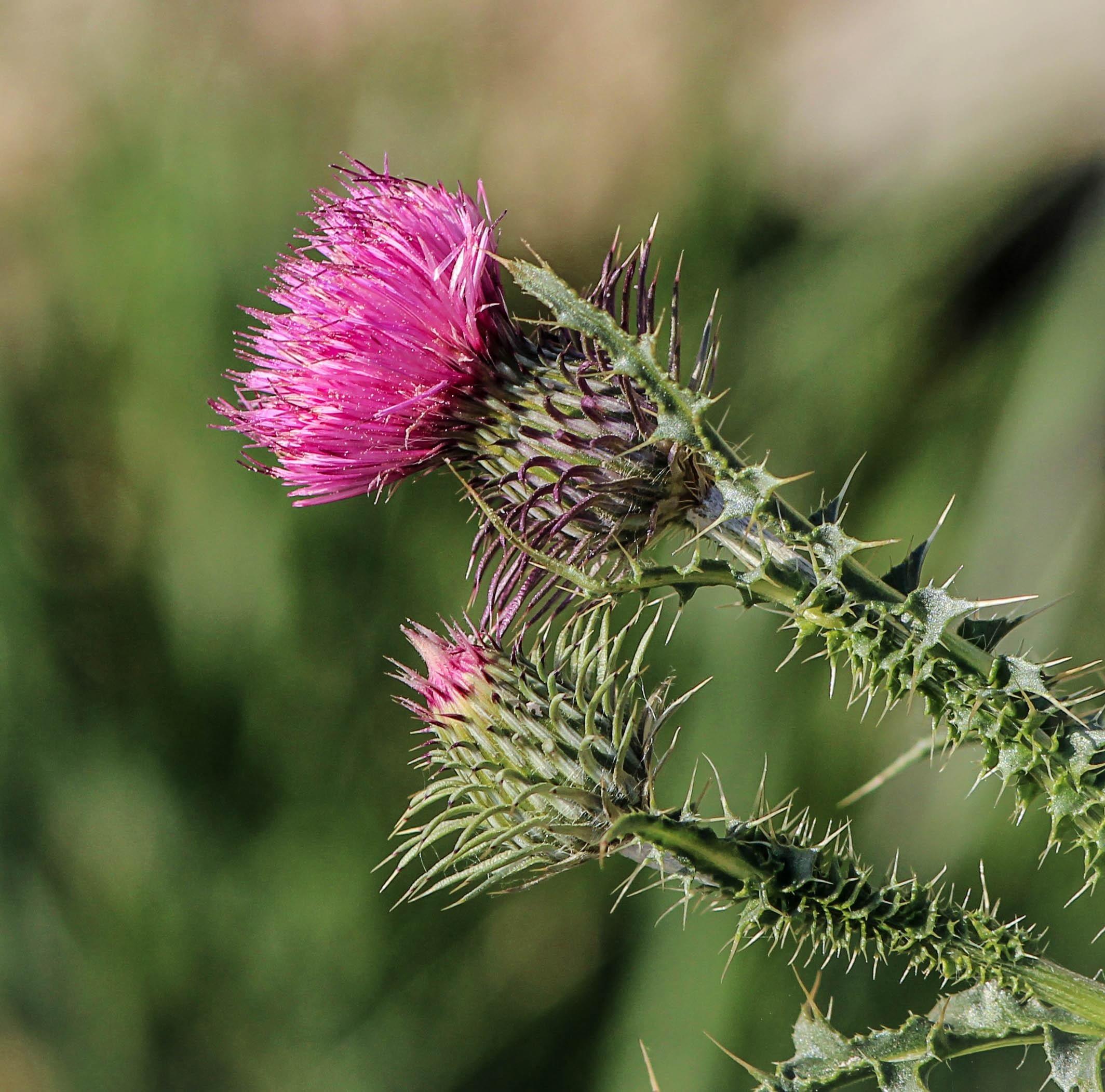 Adjuvants for Herbicides