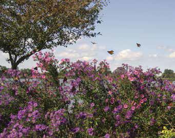 Adkins Arboretum Native Landscape Design Center on california native garden design, english cottage garden design plans, california native plants landscape design, drought tolerant garden plans, drawing garden plans, shrub garden plans,