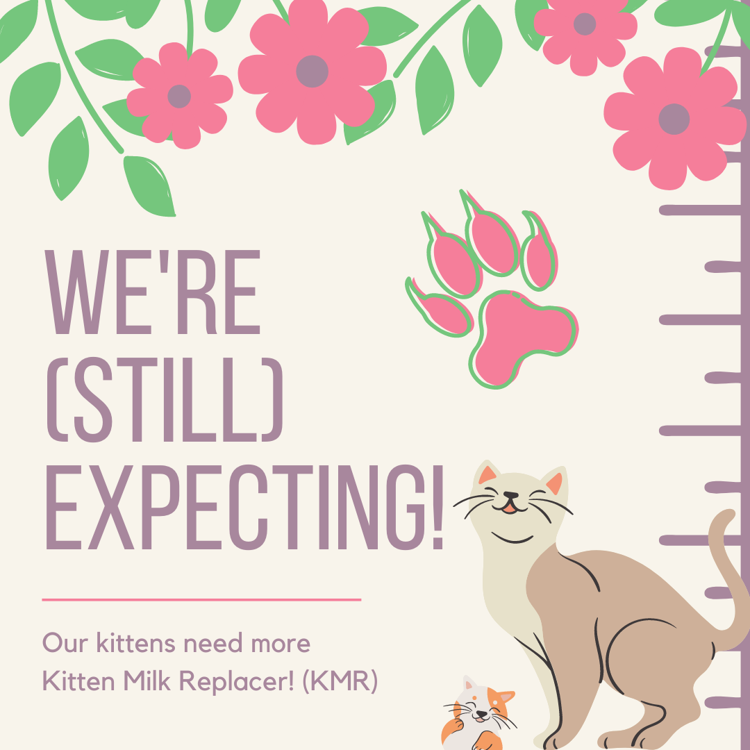 We're Still Expecting