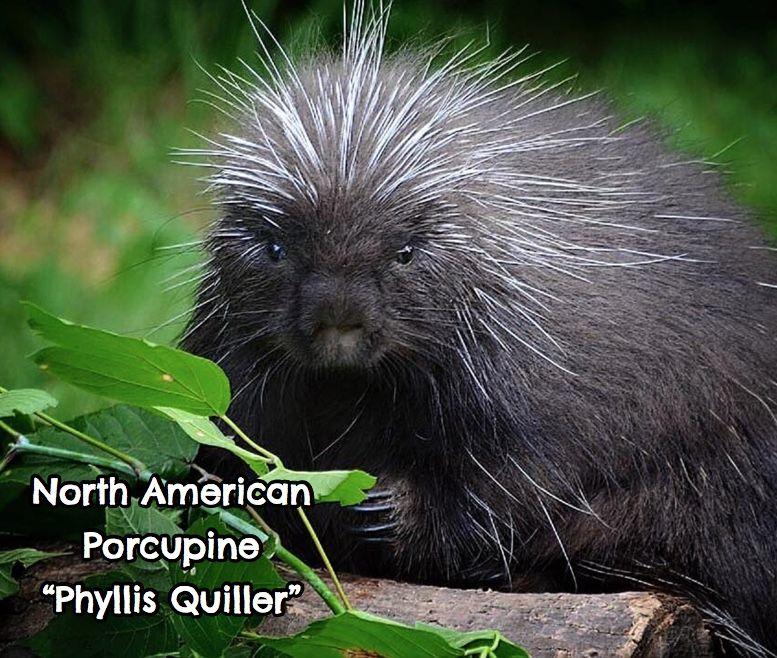 Phyllis Quiller