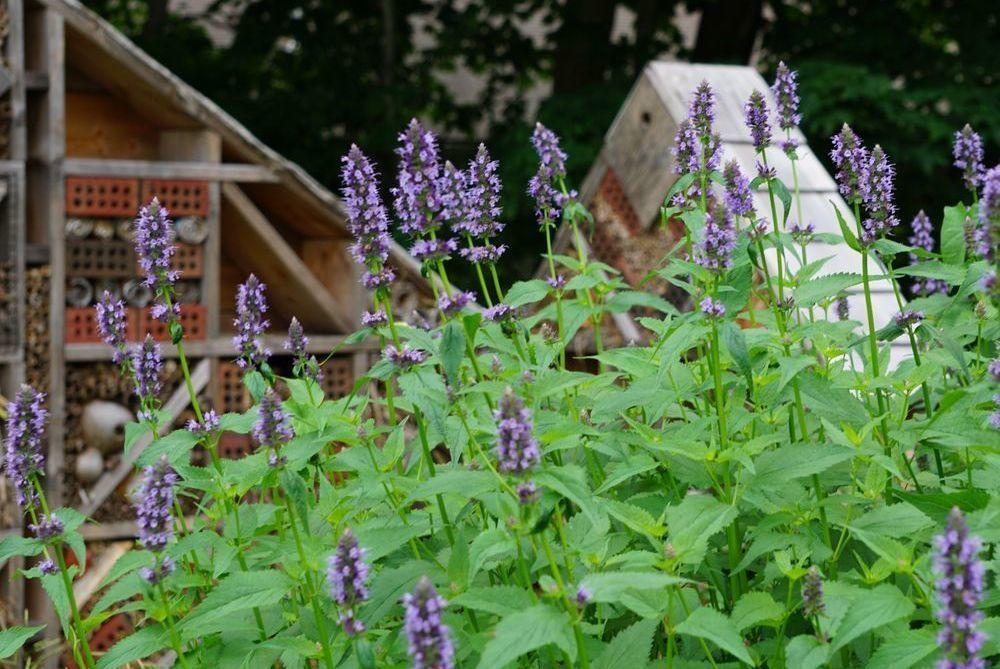The Palmieri Pollinator Garden