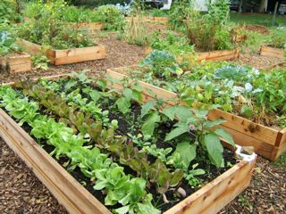 Community Gardens Make Today Count