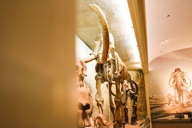 Fossils of Nebraska