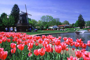 Pella Tulip Festival 2020.Group Travel Escorted Tours Pella Tulip Festival Fargo Nd