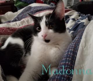 Madonna adopted 042818