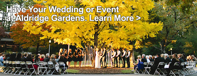 Weddings and Events Ginko Tree