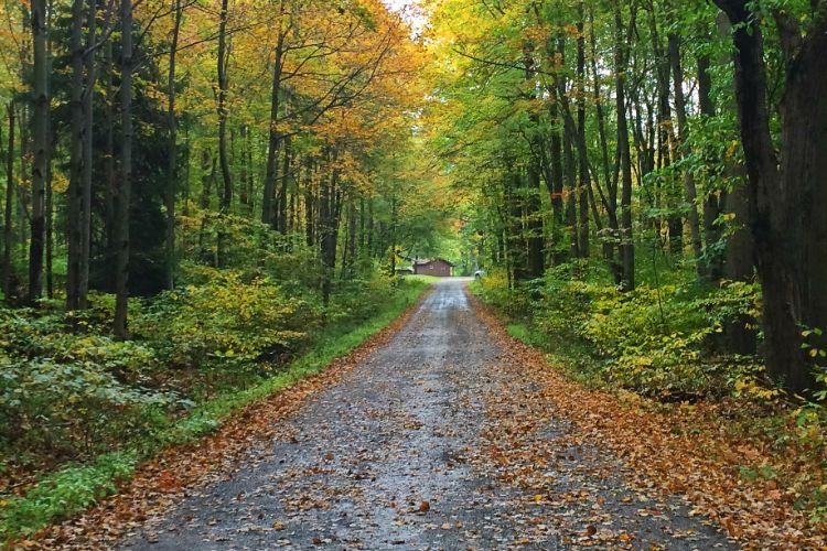 Chapel Hill Lane Fall