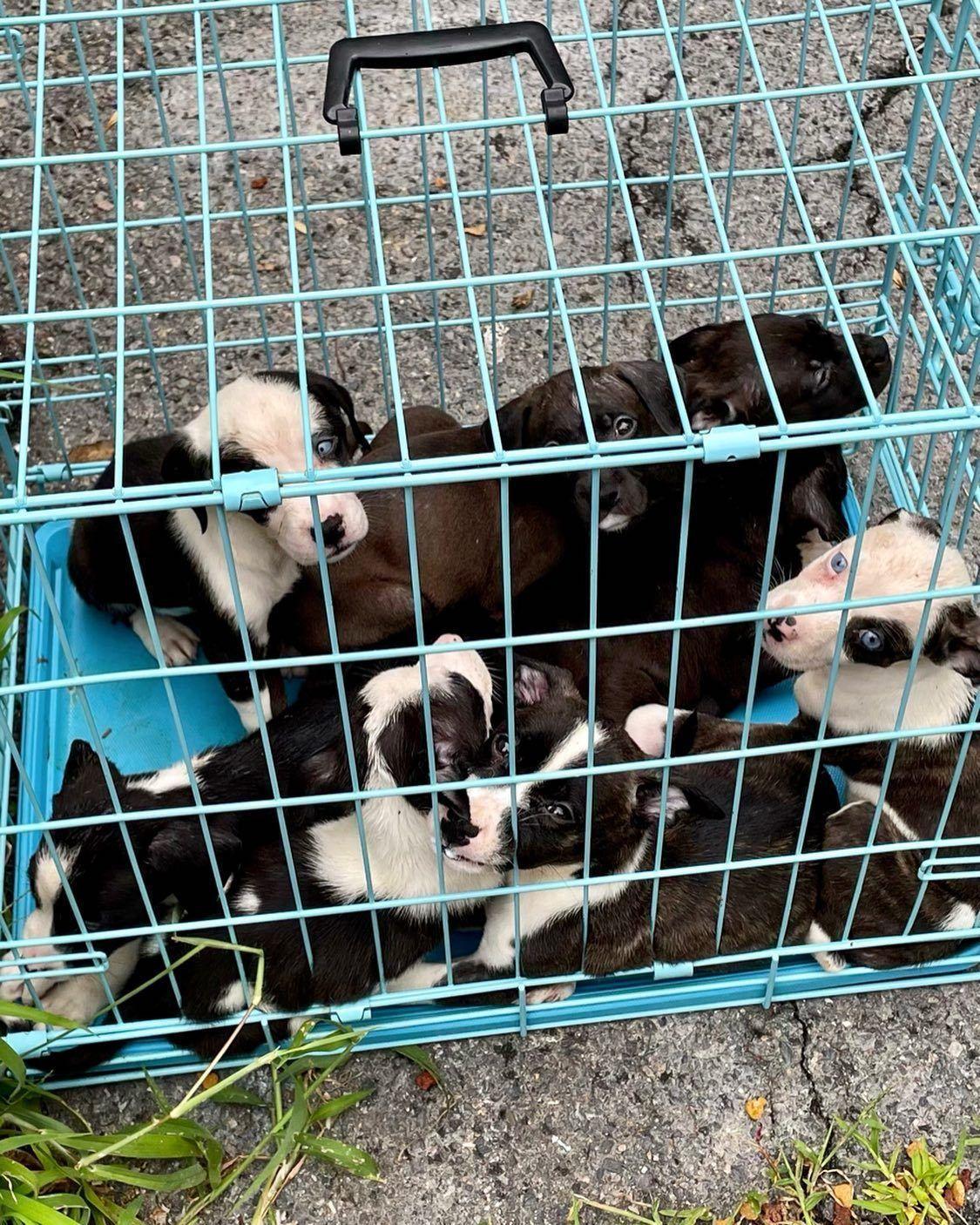 8 Tiny Puppies