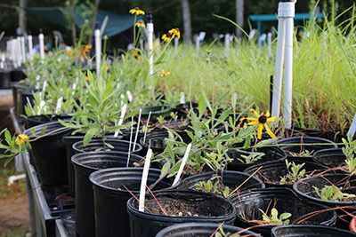 New Entergy Coastal Natives Nursery Established for Coastal Sanctuaries
