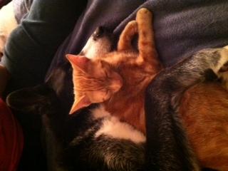 Bowser and Yoshi
