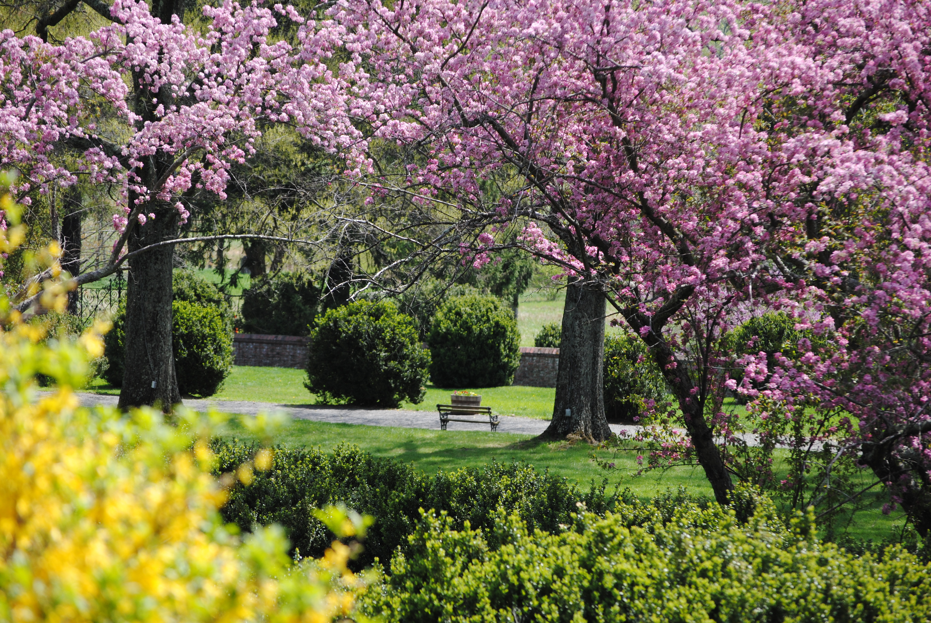 Planting, weeding, pruning – it takes a lot to keep Marguerite Davis's formal gardens looking their best! Your $25 donation will will help fund the ongoing care of this historic landscape.