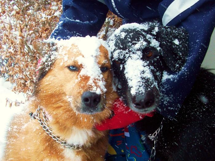 Obie & Tasha
