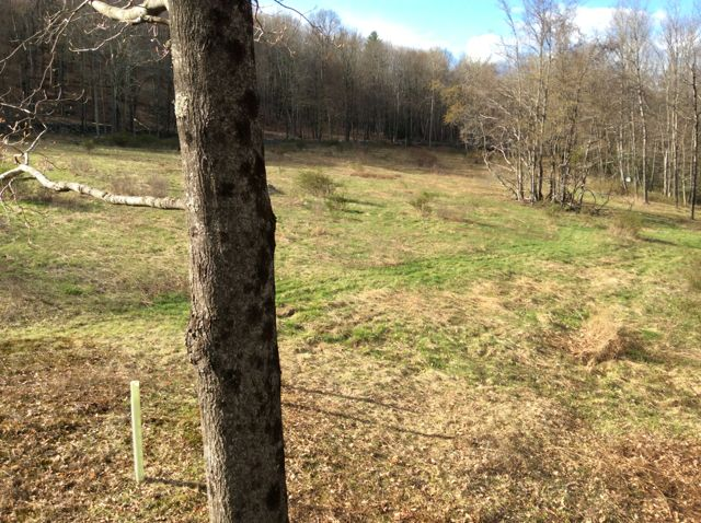 Grahamsville - 5 Acres - Share/Partnership