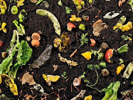 The Basics of Backyard Compost