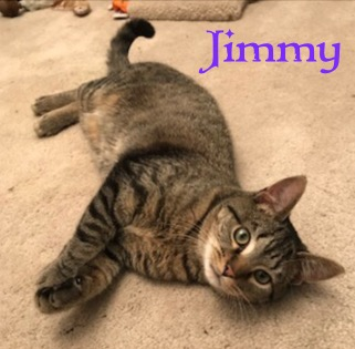 Jimmy - OTHER 042518