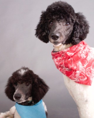 A 1 blue print company company information introduction in addition to eddie jill and patrick taking your orders our store mascots audrey and leo will be more than happy to greet you a 1 blue print company malvernweather Image collections