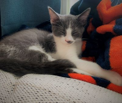 Carter - Adoption Pending