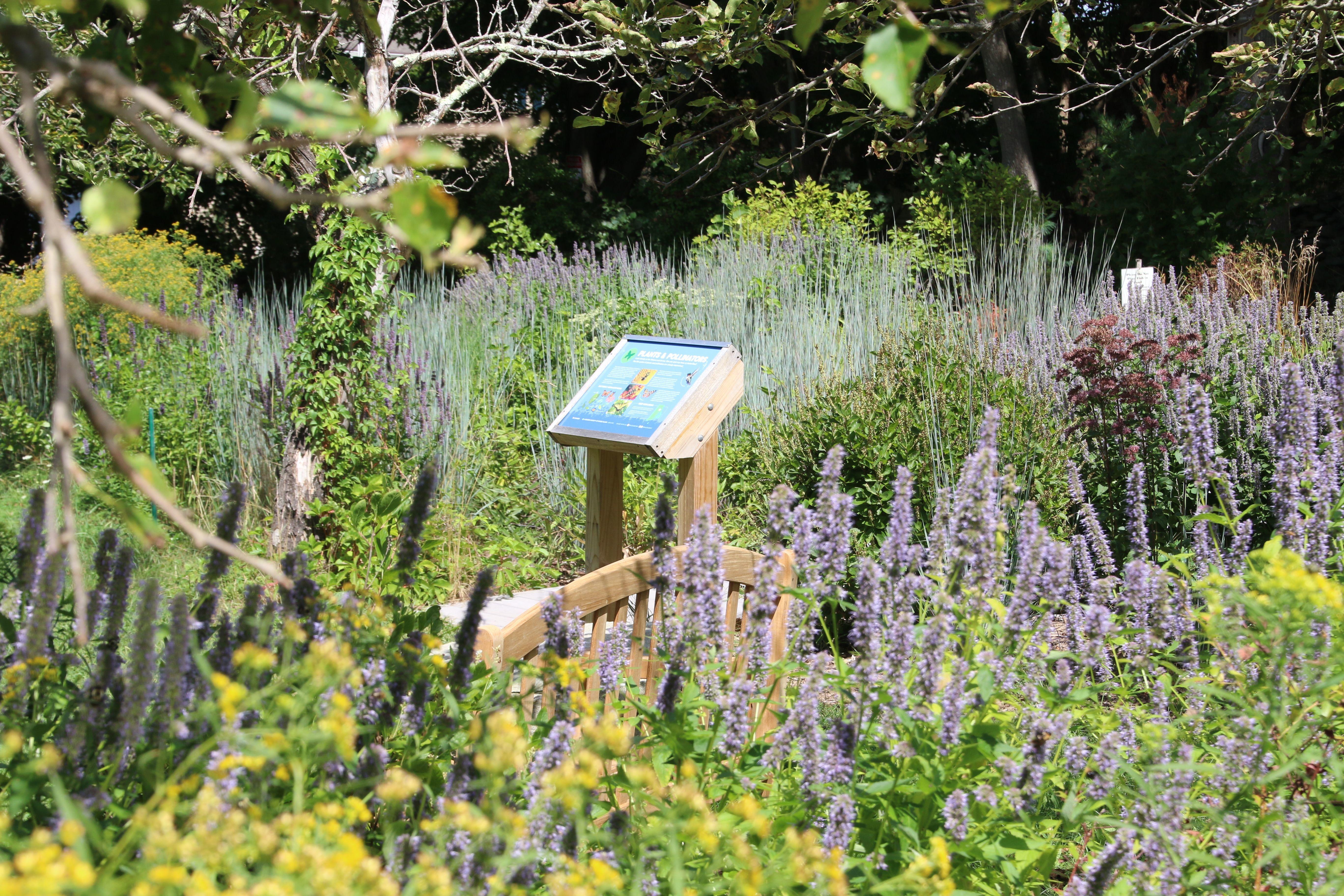 Audubon Rose Pollinator Discovery Garden Web Content Coming Soon