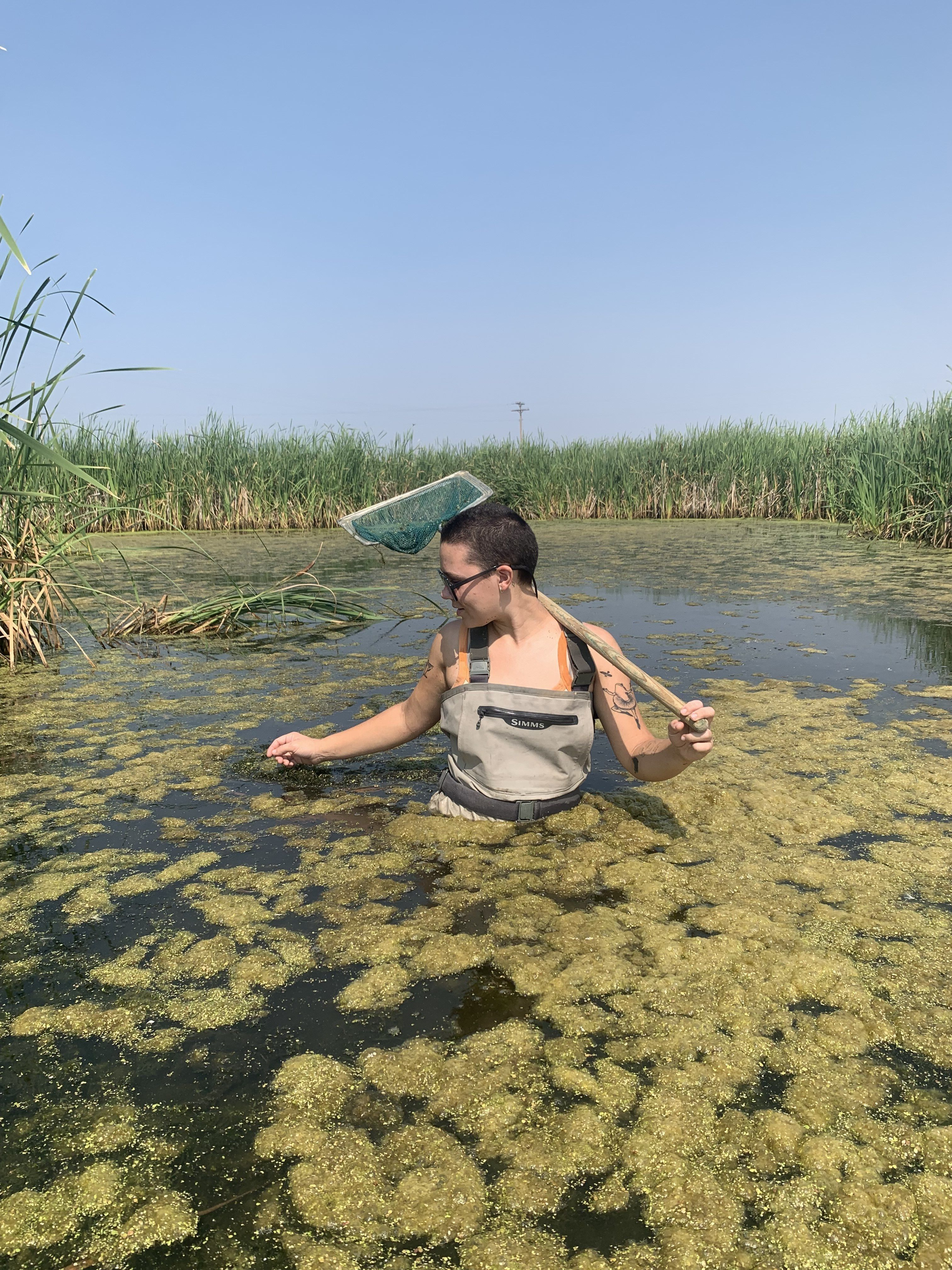 Clo wades in a algea covered pond looking for frogs