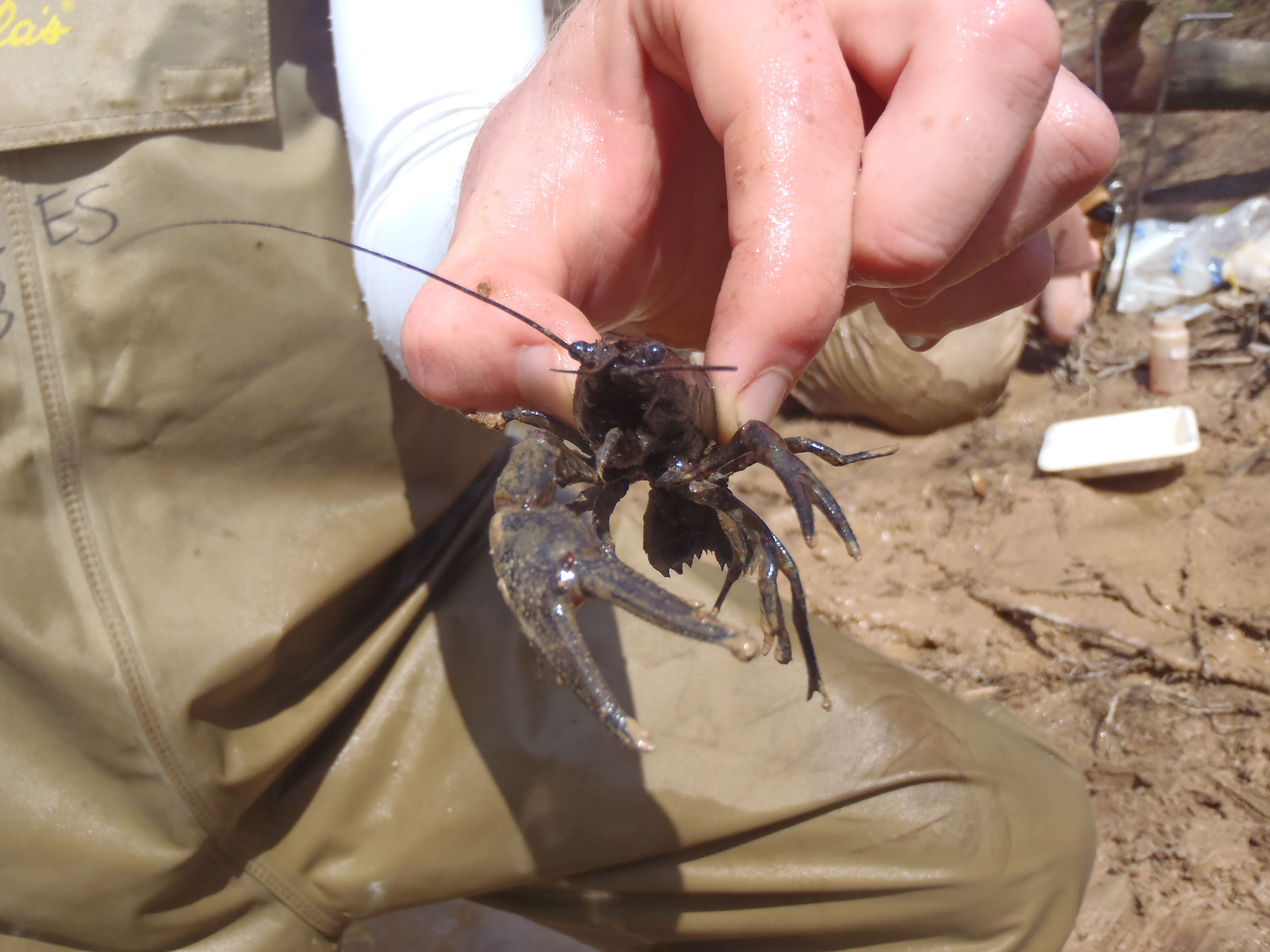 It's Alive! Find Out What is Living in a Stream Near You!