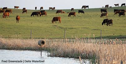 Update: Senate Passes 2014 Farm Bill