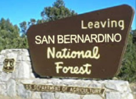 G16029 - Cedar National Forest Service Sign, Routed letters