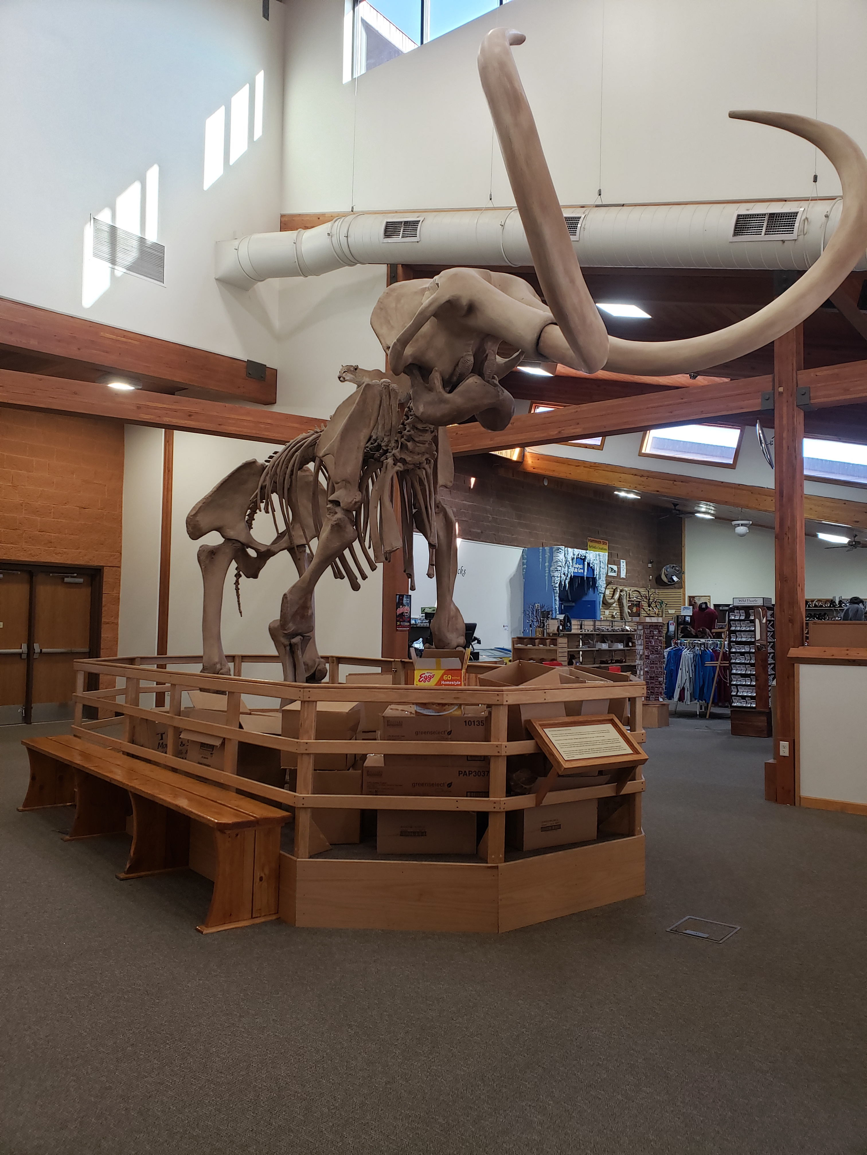 Fossil Fright Night at The Mammoth Site Recap