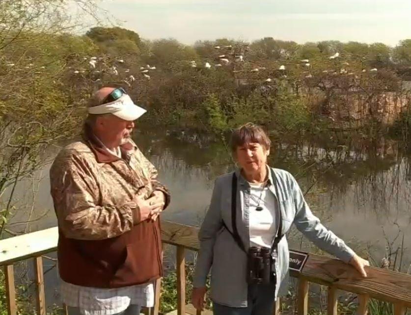 Birding on Bolivar Peninsula