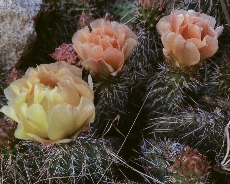 3rd Flora