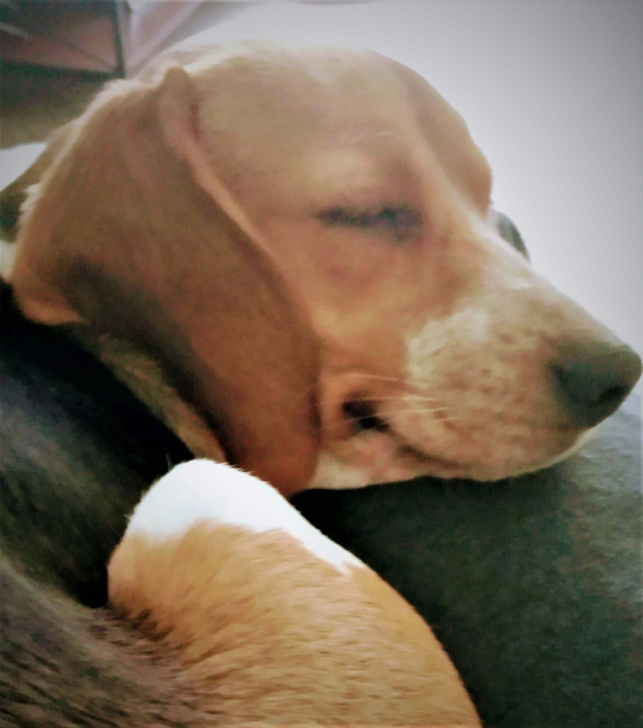 Rescue Report: Thriving Miss Daisy