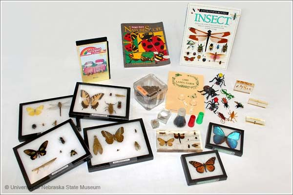 Insect Investigations