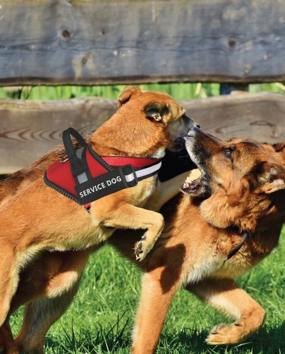 Distinguishing a Fraudulent Service Dog From a Real One