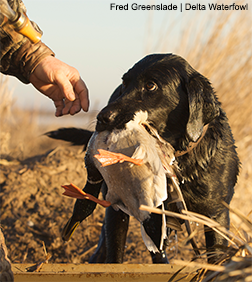 More Ducks, More Days: USFWS Authorizes Liberal Waterfowl Regulations
