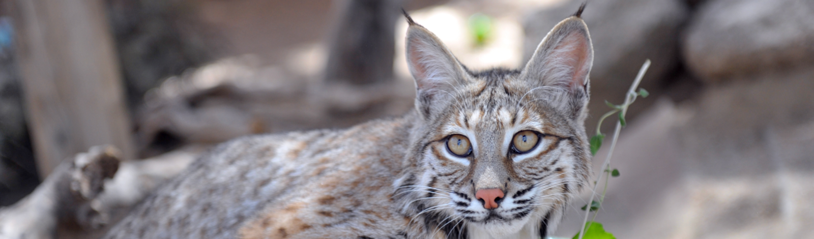 News from the Sanctuary Southwest Wildlife