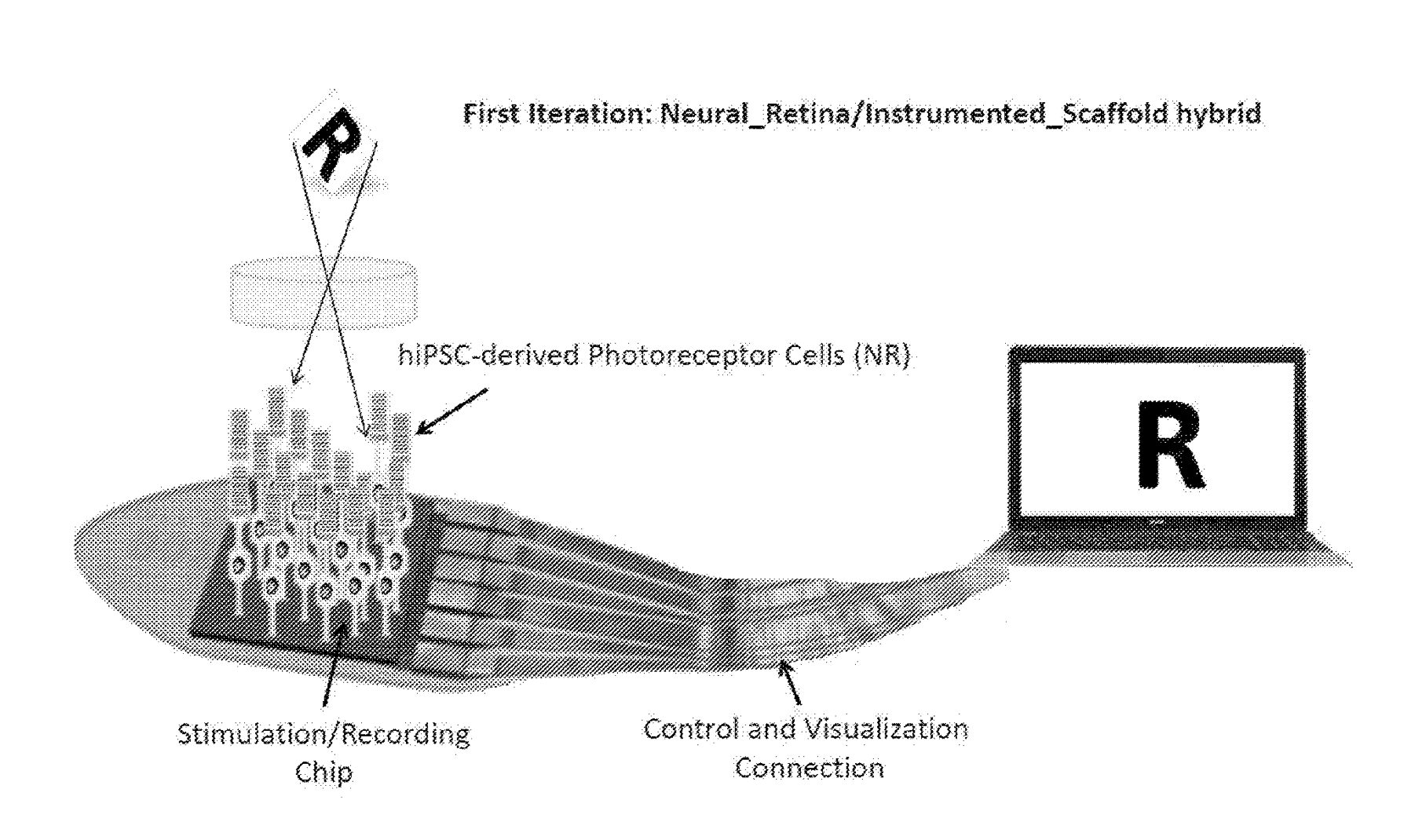 Filed Patent - Retina Regeneration with a Tissue-and-Technology Prosthesis