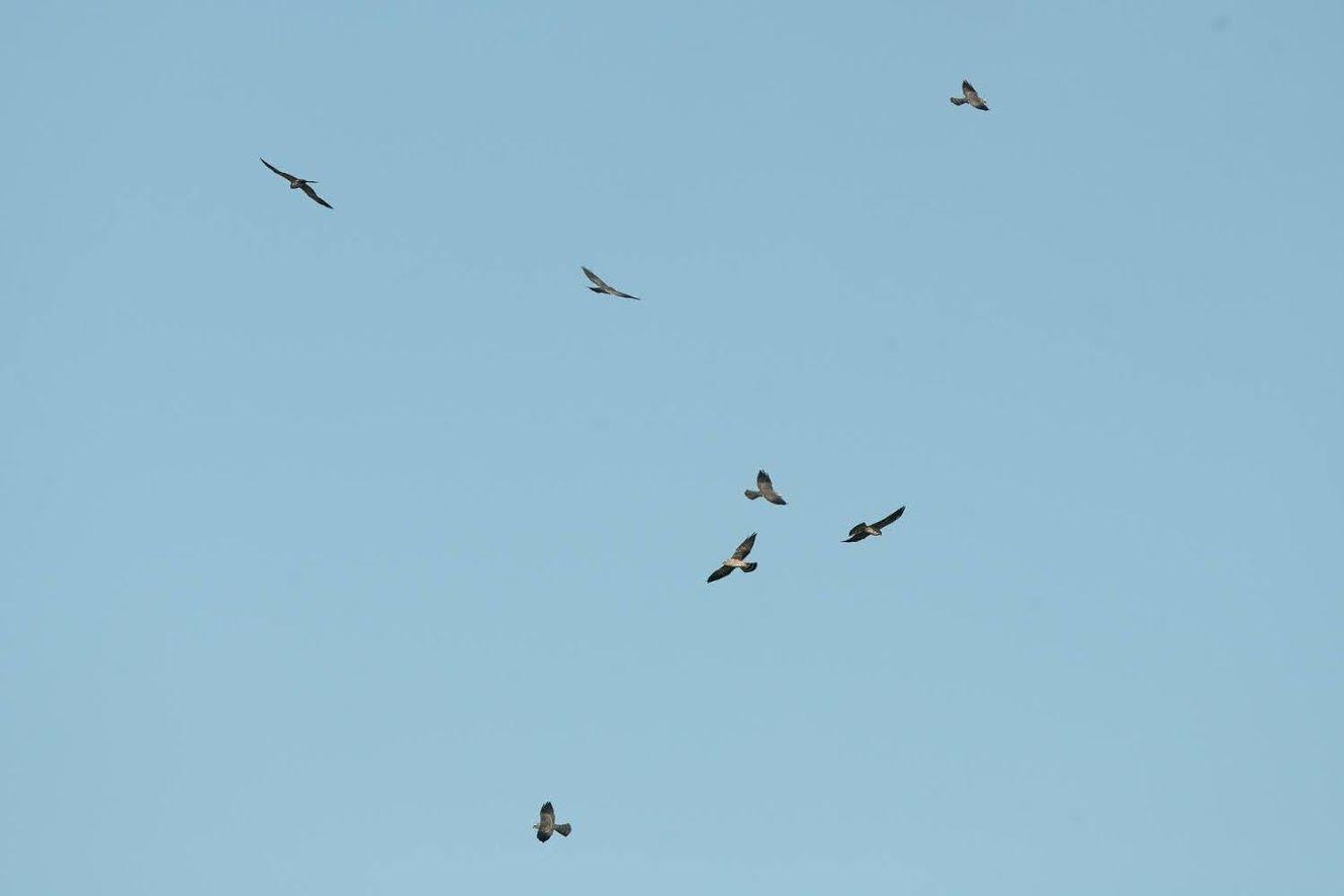 Bird Week Field Trip to Smith Point