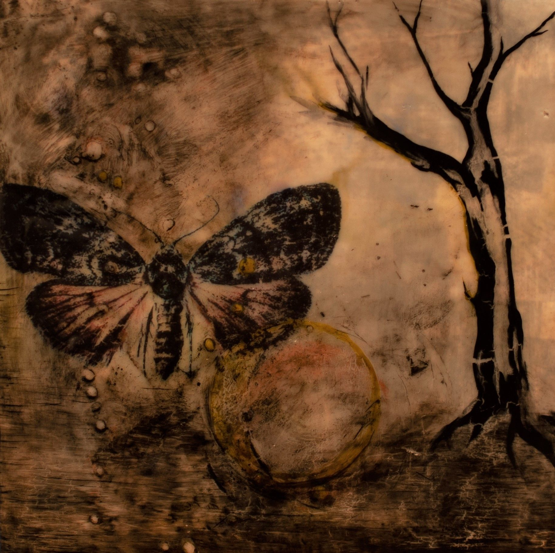 "Laurel Shepard Kvale - ""The Moth"""