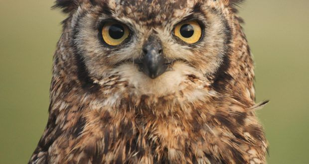 Owl Program at Huntsville Audubon